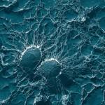 bacteria-67791_640