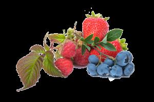 blueberry-539148_1920